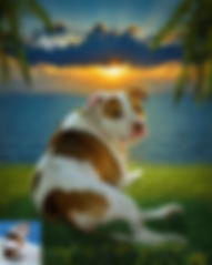 Sunset Fire Custom Digital Oil Pet Paint