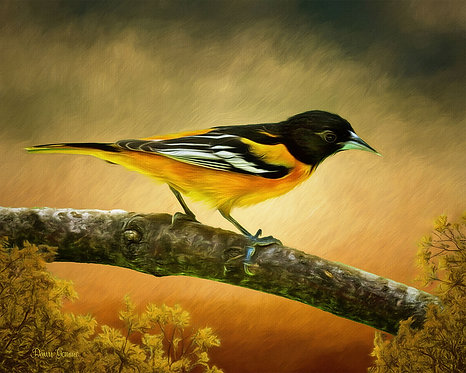 Baltimore Oriole Wildlife Digital Oil Painting