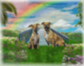 Sky Rainbow Bridge Pet Memorial Digital