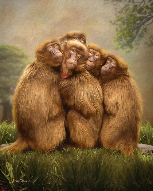 Five Baboon Huddle Wildlife Digital Oil Painting