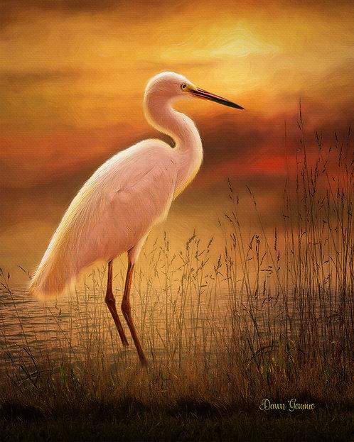 Great White Egret Sunset Wildlife Digital Oil Painting