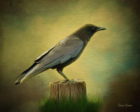 Curious Crow Digital Oil Wildlife Painting