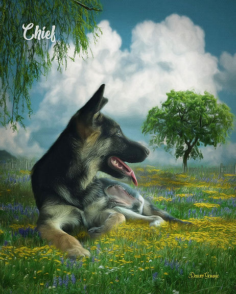 Dreamy Field Custom Dog Portrait Paintin