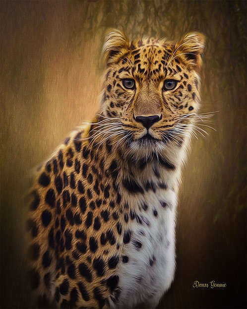 Leopard Predator Digital Oil Painting Portrait