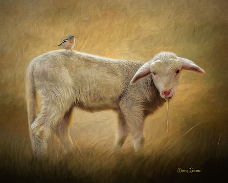 Sweet Lamb and Bird Buddy Digital Oil Painting