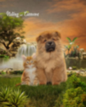 Waterfalls Paradise Custom Pet Portrait