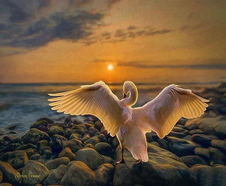 Swan Shorline Sunset Digital Oils Wildlife Painting