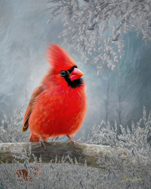 Winter Red Cardinal Digital Oil Wildlife Painting