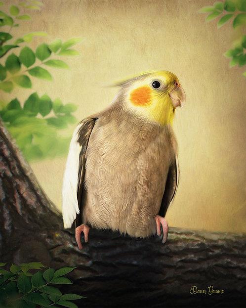 Male Cockatiel Digital Oil Painting