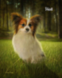 Sunny Forest Clearing Custom Oils Pet Pa