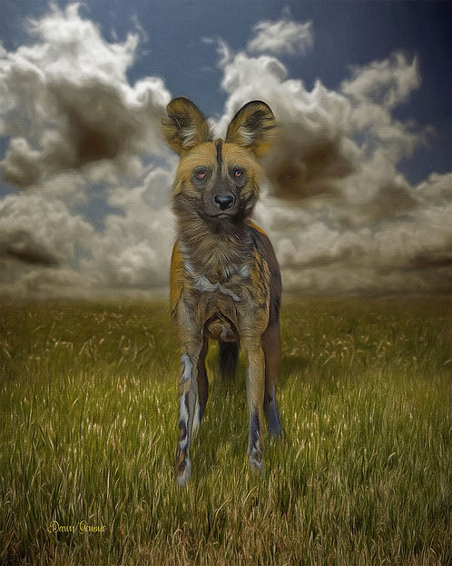 African Wild Dog Digital Oil Wildlife Painting