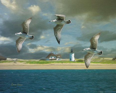 Cape Cod Shoreline Seagulls Wildlife Digital Oil Painting