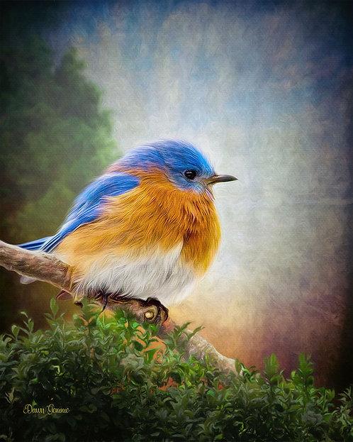 Eastern Bluebird Digital Oil Wildlife Painting