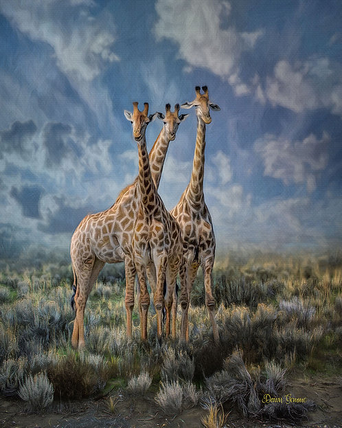 Curious Giraffe Trio Digital Oil Wildlife Painting
