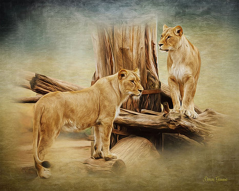 Lioness Sisters Digital Oil Wildlife Painting