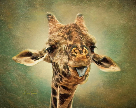 Adorable Giraffe Being Playful Digital Oil Wildlife Painting