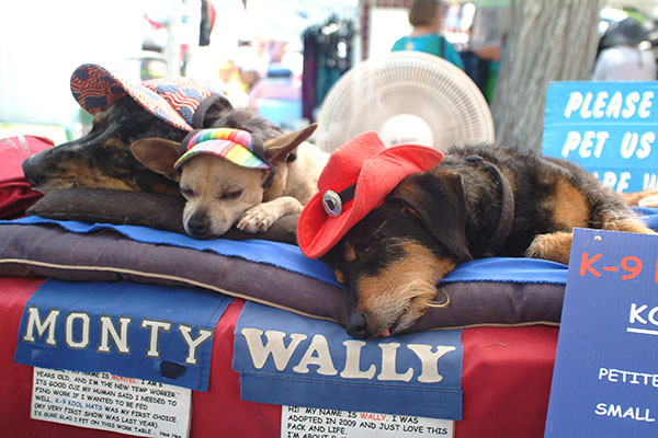 Dogs at Dog Hat Booth