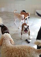 wilmette dog daycare winnetka dog daycare evanston dog daycare