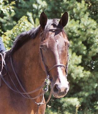 Horse Massage Ocala Gainesville florida