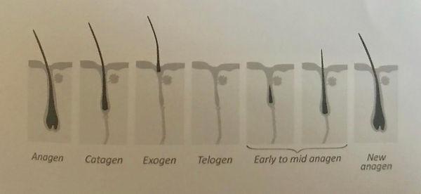 growth cycle.jpg
