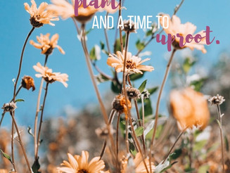 A Time to Plant, and a Time to Uproot