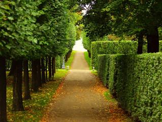 Hedge Trimming Basics: Easy Maintenance
