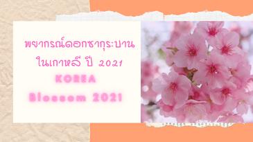 พยากรณ์ดอกซากุระบานในเกาหลี ปี 2021