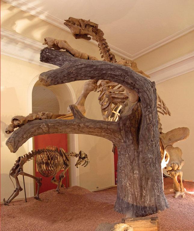 Paleontologia: Fóssil Preguiça Gigante