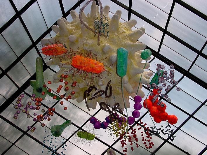 Museu da Vida Célula Parque da Ciência
