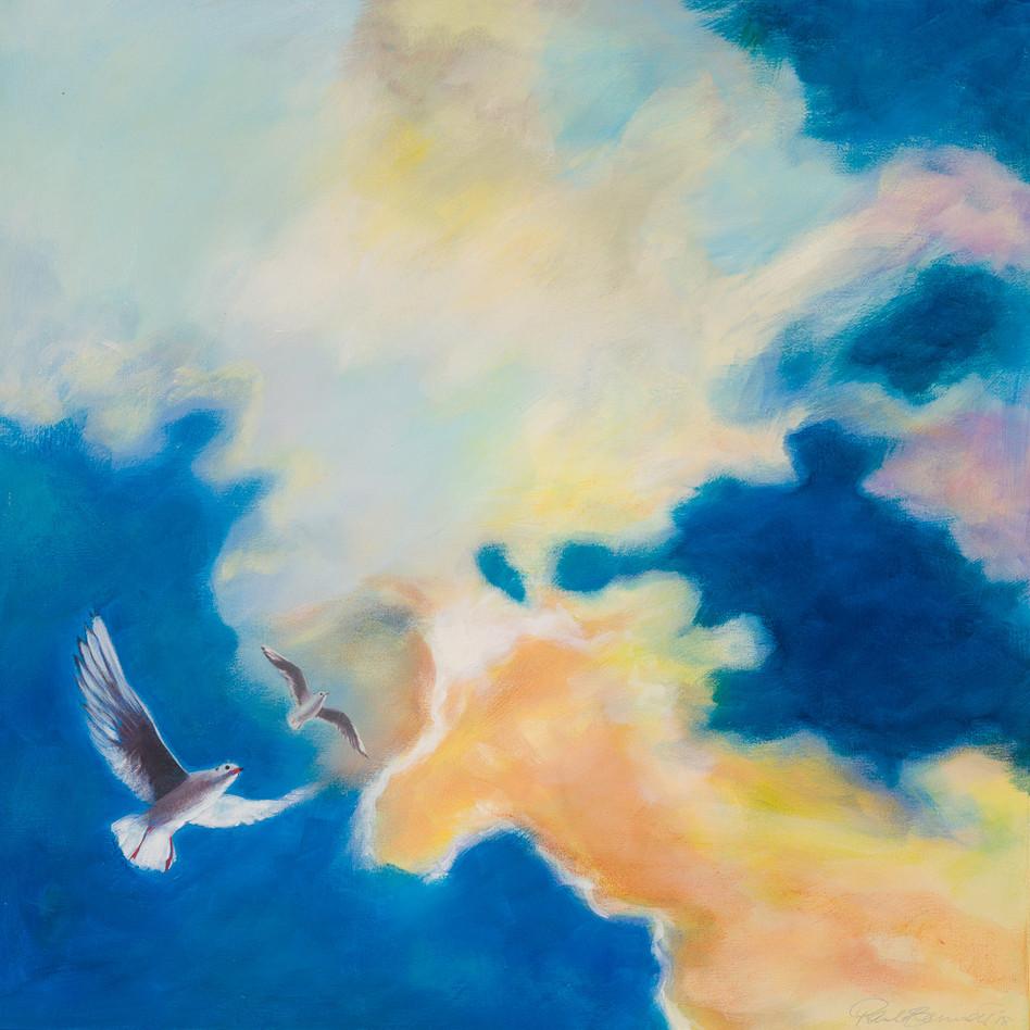 'Seagull Skys' 64 cm X 64 cm