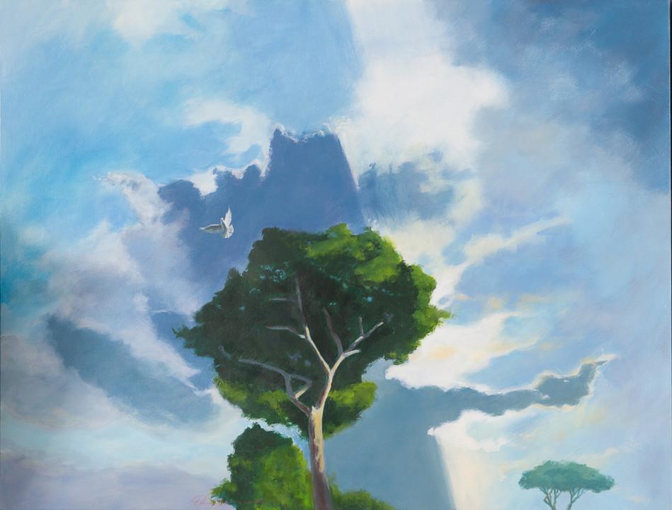'Dove Dreaming' 85 cm X 110 cm