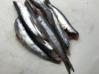 Anchovies, Rainbow Trout, Boquerones, Mushroom Medley & Dried Porcini Delivery Wednesday January 15