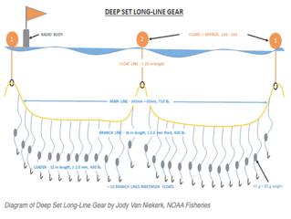 California Deep Set Long-line Fishery