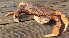 Dungeness Crab, Bocaccio Rockfish, Smoked Rainbow Trout & Mushroom Medley Delivery Thurs. Jan 9th