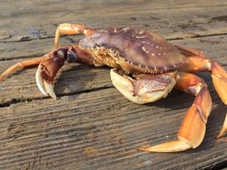 Dungeness Crab, O2T Boquerones & Golden Chanterelle Delivery Thursday, December 19th
