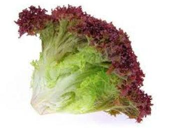 Red Lollo Salad