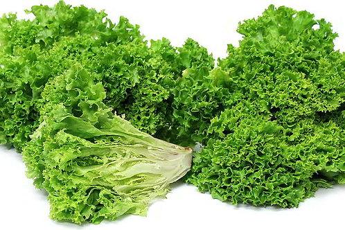 Green Lollo Salad