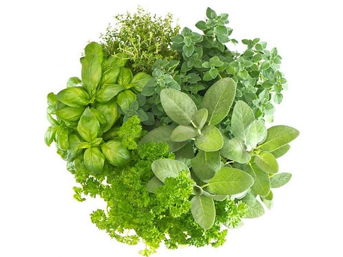 Herbs - Basil,Parsley, Coriander, Mint, Dill, Marjoram