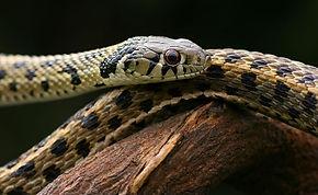 garter snake animal encounter