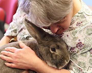 exotics animal as therapy encounters