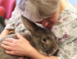 animal therapy exotic encounters