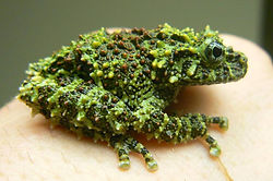 mossy frog animal encounter