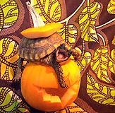 yellow foot tortoise animal encounter