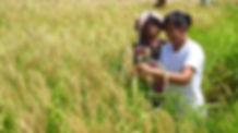 North Bali rice fields by Pengalaman Rasa