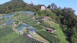 Niederurnen Burghalden Vineyard