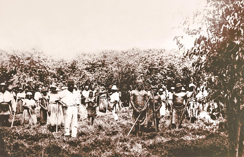 Escravos no eito de cafe Ibicaba
