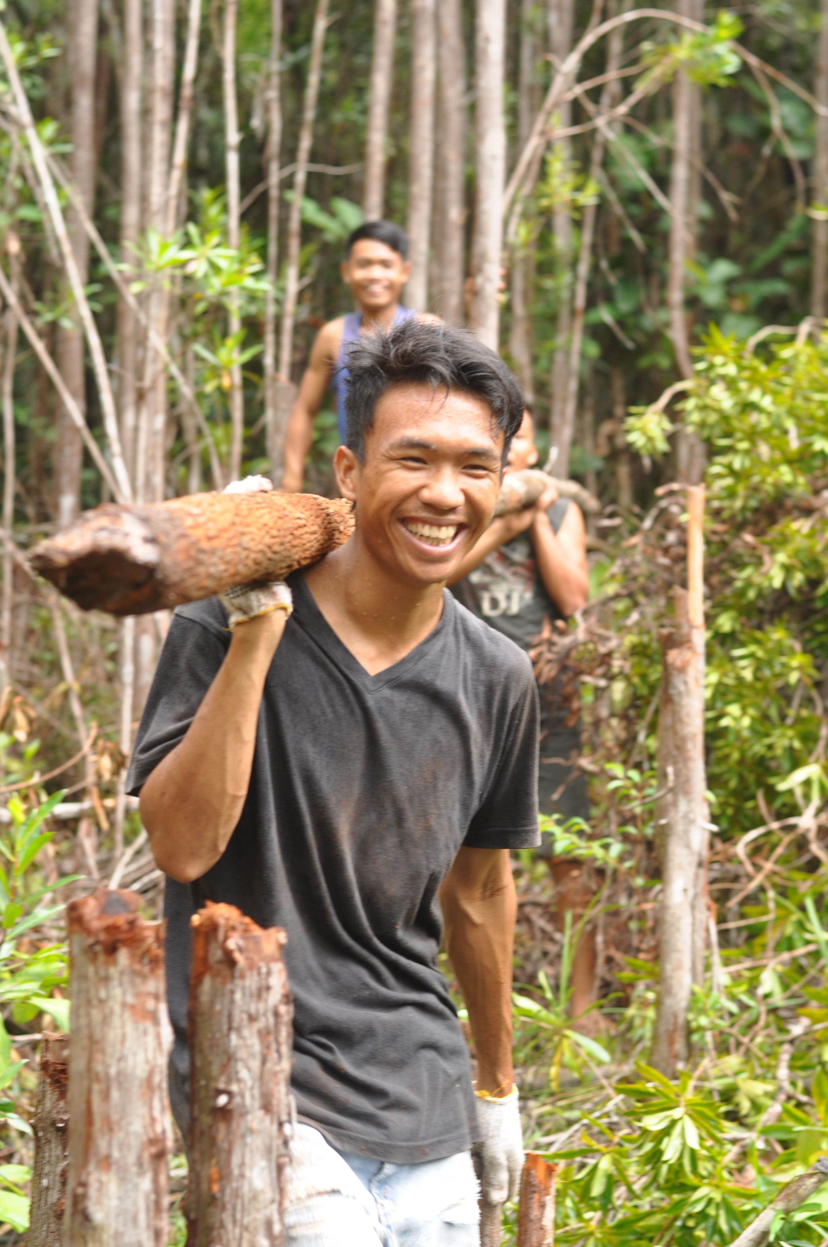 Collecting wood from the jungle