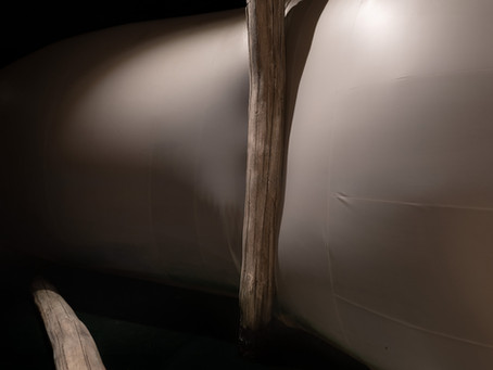 VENICE PAVILION - La Biennale di Venezia 2019