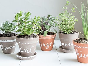 DIY-label-herb-planters-via-Jessica-Coco-and-Mingo-for-Bodhiluxe