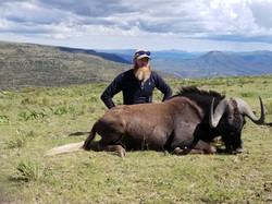 Ryan Sutheimer Black Wildebeest 2018